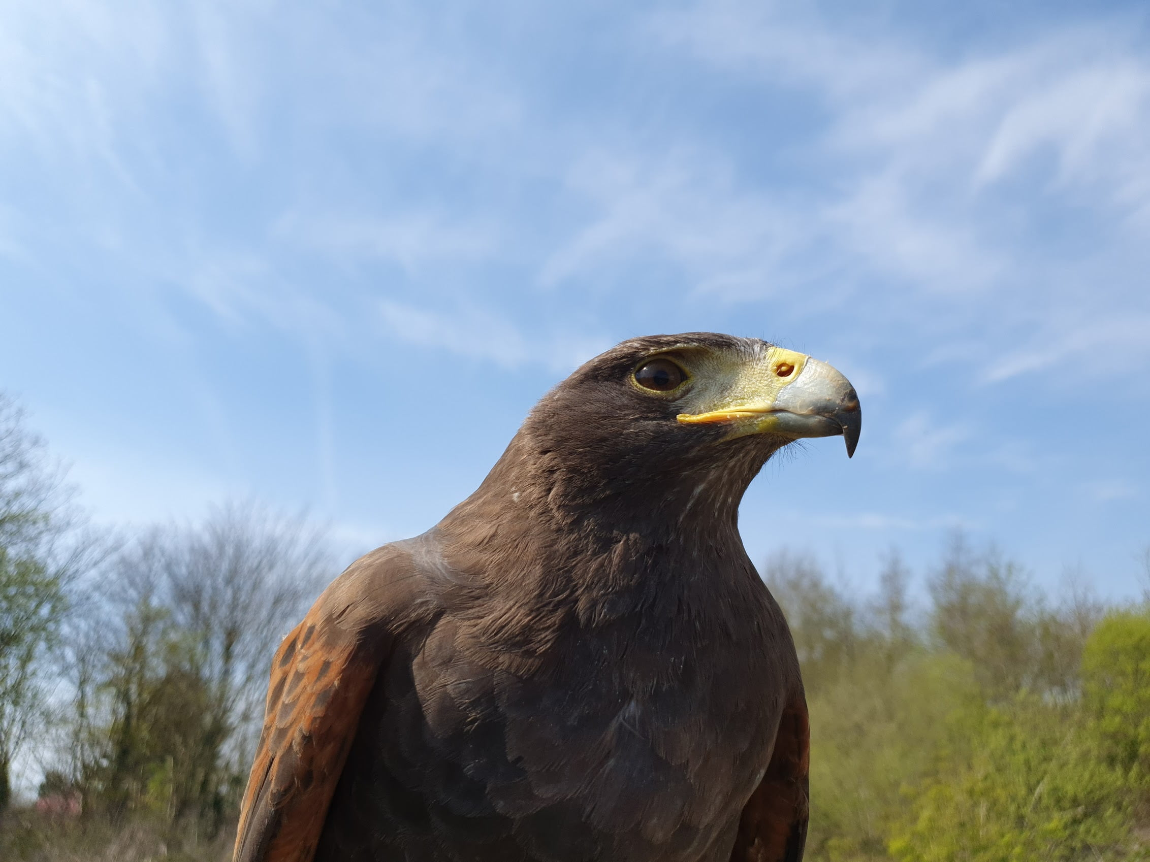 falconry services bird control