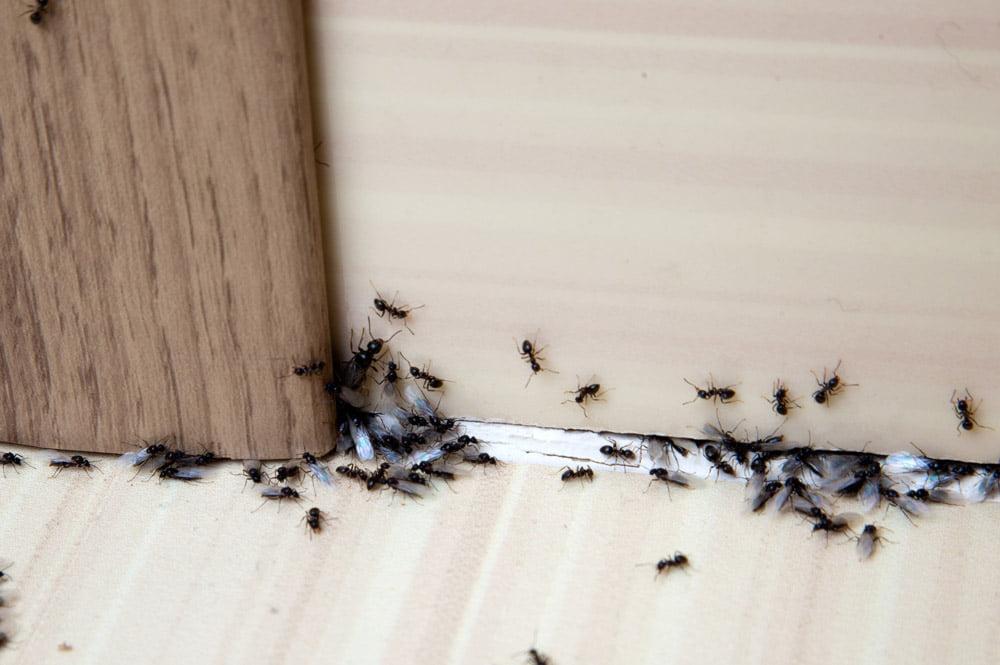 ant control cardiff