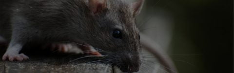 Pest Control Cardiff & South Wales