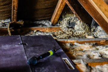 Wasp Nest Removal Cardiff